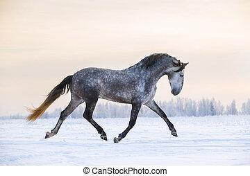 andalusian, cavalo, inverno