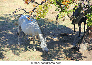 Andalusian horse on pasture - Purebred andalusian spanish  ...