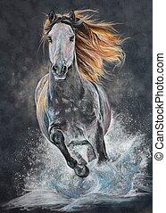 Andalusian horse run gallop - White andalusian horse run...