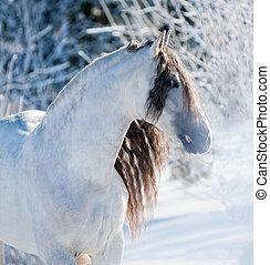 andalusian, retrato, cavalo branco, inverno
