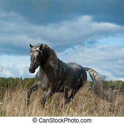 Andalusian stallion in autumn running under stormy skies