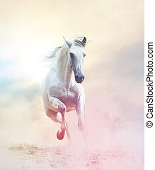 andalusian stallion in dust, toned picture