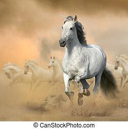Andalusian stallion in prairies