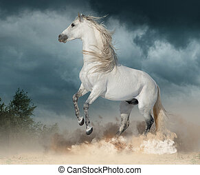 andalusian stallion rears in the dust with stormy skies...