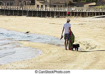 andando cão, praia