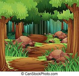 andando gita, foresta, pista, scena