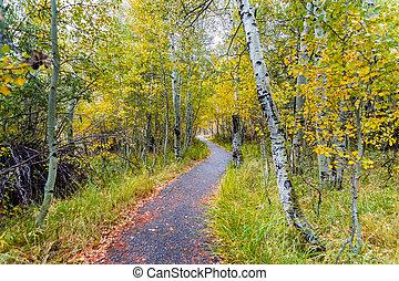 andar, aspen, oriental, bosque, vestido, árvore, nublado, dia outono, através, foliage, califórnia, sierra, caminho, montanhas