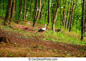 andar, caça, alimento, prado, cegonha, verde branco