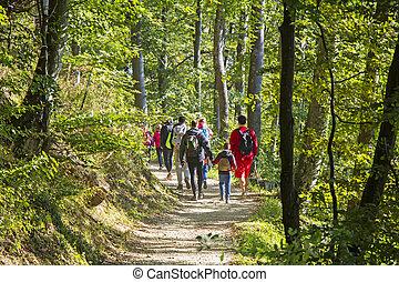 andar, grupo, hiking, pessoas, rastro, floresta