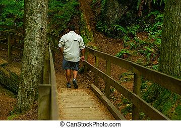 andar homem, ao longo, panorâmico, rastro