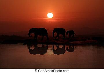 andar, pôr do sol, 3, família, elefantes