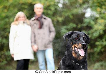 andar, parque, par, idoso, cão