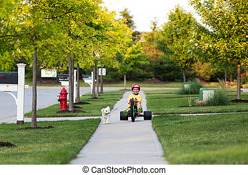 andar, vizinhança, cão, triciclo