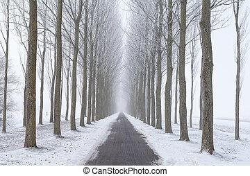 ande bicicleta caminho, entre, geado, árvore, filas, em, nevoeiro