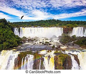 Andean condors fly over waterfalls Iguazu