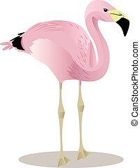 Andean flamingo cartoon bird vector illustration