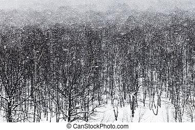 ander, roble, nieve, ventisca, bosque