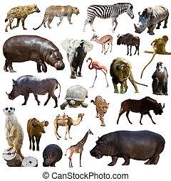 anderen, dieren, nijlpaard, set, afrikaan