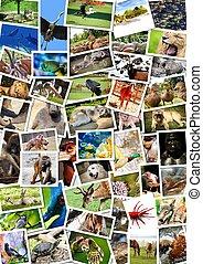 anders, dieren, collage, op, postkaarten