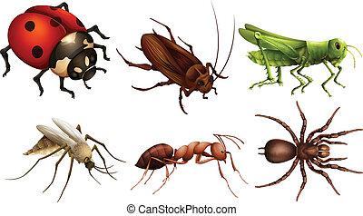 anders, insecten