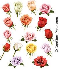 anders, roses., verzameling, vector.