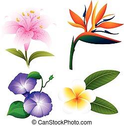anders, soorten, van, bloemen