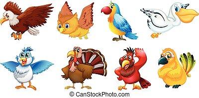 anders, vogels, types