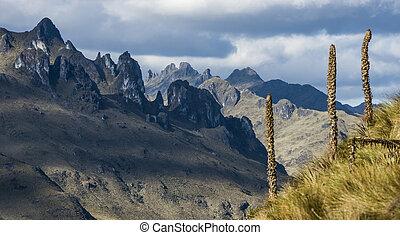 andino, nacional, andes., parque, cajas, altiplanos, equador