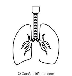 andnings, kontur, lungan, system