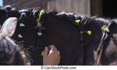 ?ands weave meadow flowers into the horse's mane. Creativity, braided pigtails on a horse, sunny day.29 of High quality 4k footage