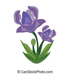 anemone flower spring image