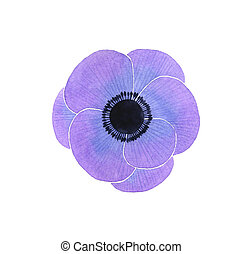 Single Flower Stock Illustration Images 23970