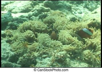 anemone underwater diving video - underwater diving video