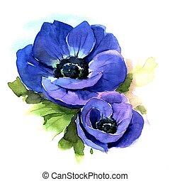 Anemone. Watercolor illustration