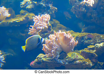 anemonefish in colorful anemone