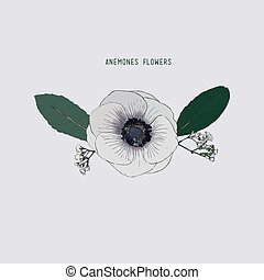 Anemones flowers , hand drawn sketch line art windflower.