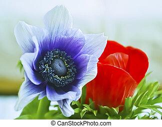 anemones - purple and red anemones