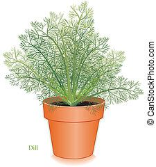aneth, aromate, pot fleurs, argile