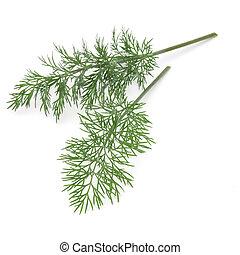 aneto, colpo, ramo, erba, foglie, su, isolato, sfondo verde,...
