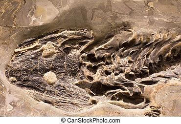anfibio, fósiles, roca