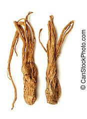 angélica, sinensis