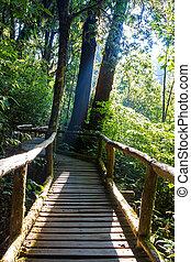 Ang Ka Nature Trail at Doi Inthanon National Park, Chiang Mai, Thailand