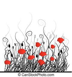 ang, poppie, isolado, fundo, branca, capim, vermelho