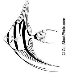 Angel fish, Coral fish