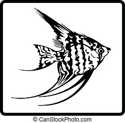 Angel Fish - Outlines of an angel fish.