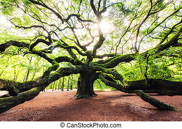 Angel Oak Tree sunrise in South Carolina