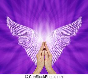 Angel Therapist seeking Angel Guidance