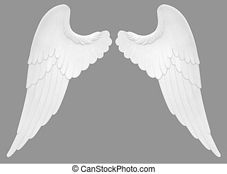 Angel Wings - Angel wings isolated on a white background...