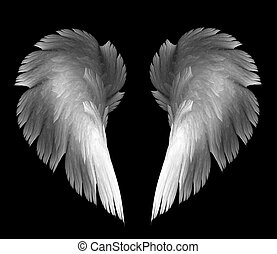 angel wings - light angel wings on a black background