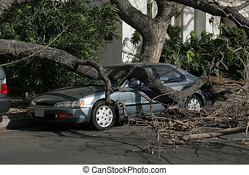 angeles, kelepce, autó, után, fa, storm., alatt, bukott,...